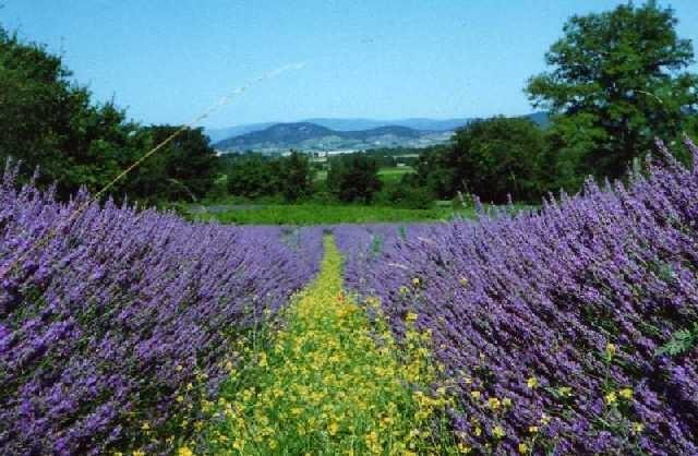 Camping - Saint-Privat-de-Champclos - Languedoc-Roussillon - Domaine le Clos des Capitelles