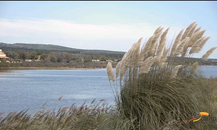 Camping - Gruissan - Languedoc-Roussillon - Le Hameau des Canisses
