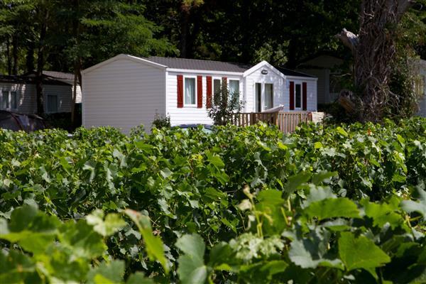 Camping Le Pressoir - Aquitaine - Petit-Palais-et-Cornemps