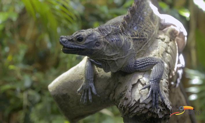 Visiter le parc zoologique Bioparco de Rome