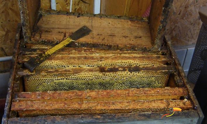 Secrets de fabrication du Miel