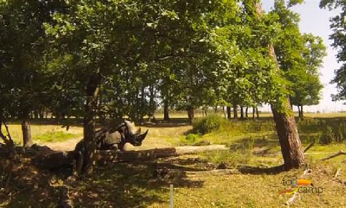 Découvrez en vidéo le safari de Peaugres