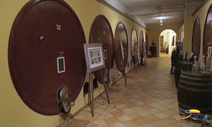 Déguster le Est ! Est !! Est !!! lors de la fête du Vin de Montefiascone en Italie
