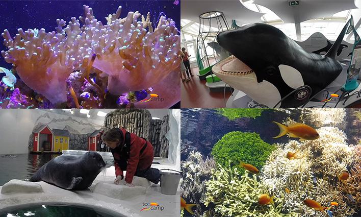 L'incroyable aquarium Océanopolis de Brest